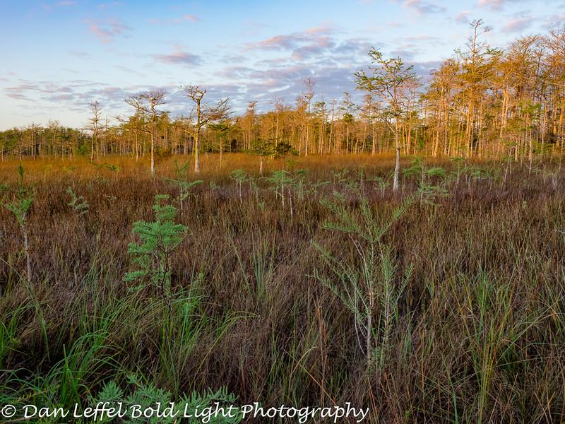 Everglades 2016 002