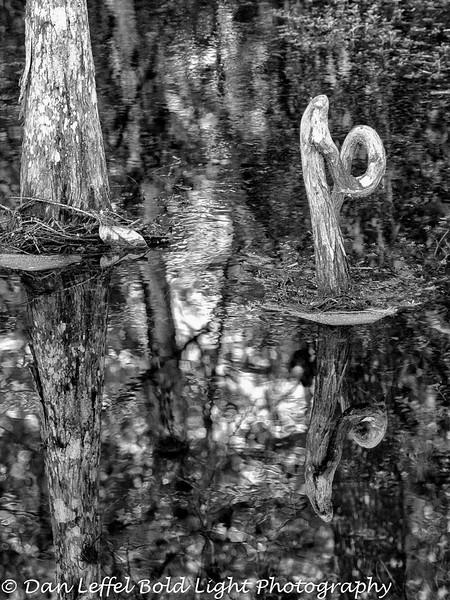 Everglades 2016 003