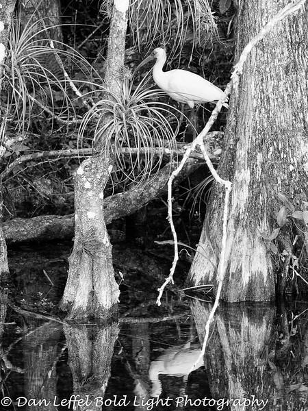 Everglades 2016 007