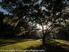 Jeykll Island Georgia Oak Tree