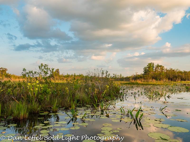 Okefenokee Swamp Reflection
