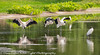 Harris Neck National Wildlife Refuge Georgia Storks