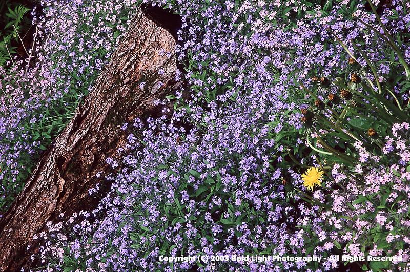 NHflowers