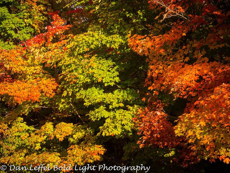Michigan Upper Peninsula Fall Color