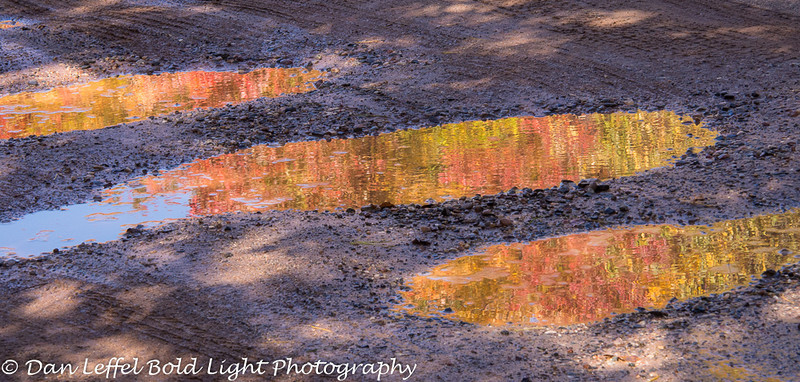 Fall color reflecting in puddles