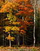 Michigan Upper Peninsula Fall Colors