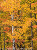 Fall Color - Michigan Upper Peninsula