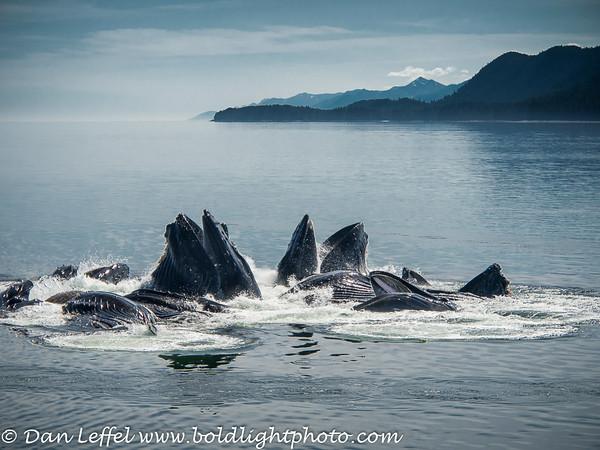 Alaska 2014 Whales & Bears