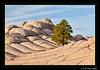 White Pockets sunrise, Vermilion Cliffs Wilderness Area, near Page, AZ