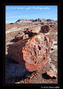 1_Petrified Forest_5D-Mark-II__MG_8742