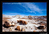 1_Petrified Forest_5D-Mark-II__MG_8787