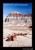 1_Petrified Forest_5D-Mark-II__MG_8698