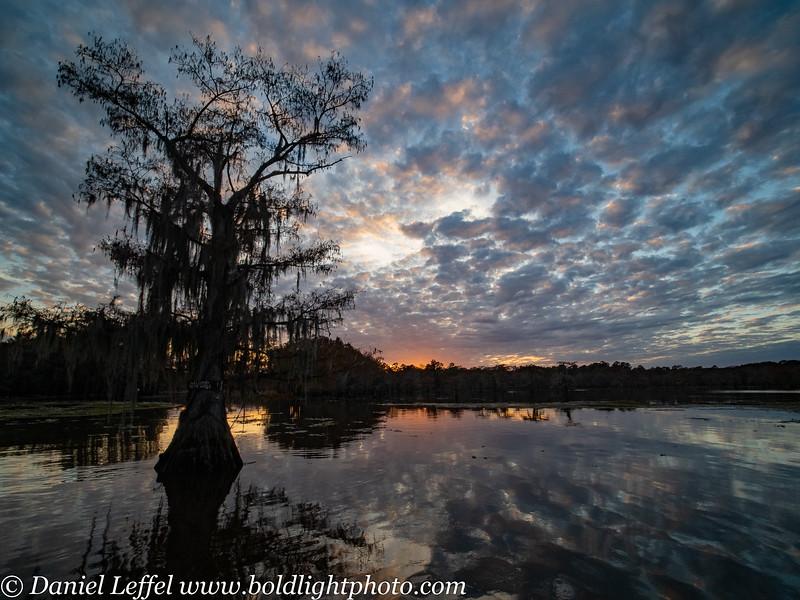 Caddo Lake Texas Fall Colors