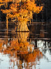 Caddo Lake Texas Fall Colors