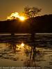 Caddo Lake Texas Fall Colors Sunrise