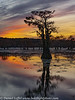Caddo Lake Texas Fall Colors Sunset
