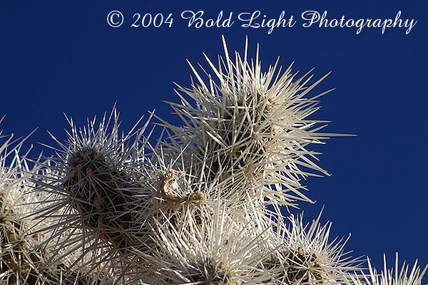 AH-Cactus_0708