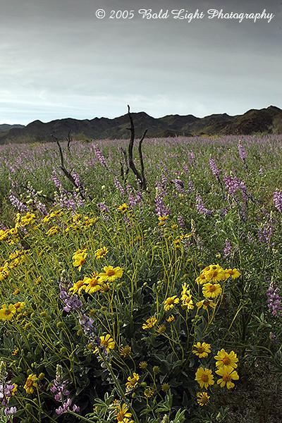 California - Joshua Tree National Park