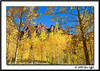 _MG_6719_CO_Fall_0907-RGB