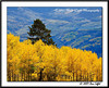 _MG_7065_CO_Fall_0907-RGB2