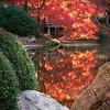 Ft Worth Japanese Garden 112019-8