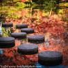 Ft Worth Japanese Garden 112019-14