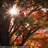 Ft Worth Japanese Garden 112019-4