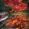Ft Worth Japanese Garden 112019-6