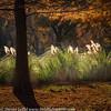 Ft Worth Japanese Garden 112019-5