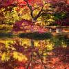 Ft Worth Japanese Garden 112019-13