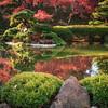 Ft Worth Japanese Garden 112019-7