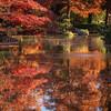 Ft Worth Japanese Garden 112019-10