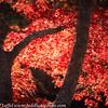 Ft Worth Japanese Garden 112019-20