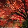 Ft Worth Japanese Garden 112019-19