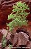 Grand Canyon B01