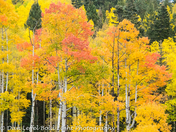 New Mexico Fall & Lake Powell - Oct 2014