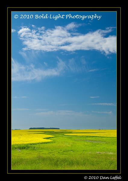 North Dakota canola fields in bloom - July 2010
