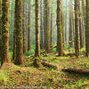 Cape Perpetua Forest Oregon