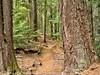 Oregon Cascades Diamond Creek Falls Trail