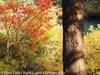 Fall Color Oregon