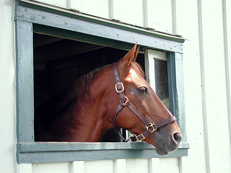 Horse with his head out the window of his barn in the Kentucky Bluegrass