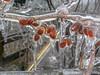 ice storm 2003