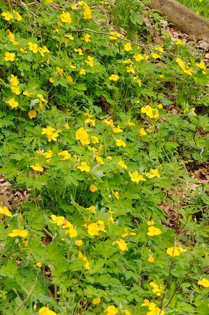 4/13/2010 Wildflower Hike