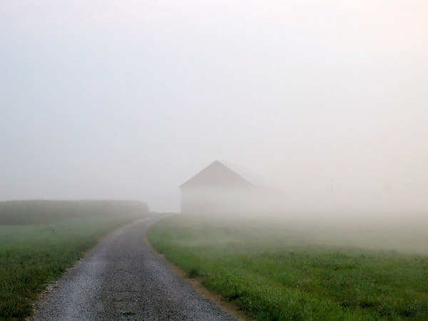 Stock image of a barn at the end of a gravel road.emerging from the fog at dawn.  Photographed in the Bluegrass region of Kentucky,USA.