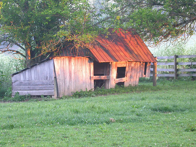 Early morning sun on an old chicken house in the Bluegrass region of Kentucky near Lexington
