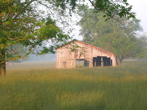 Barn in field of high summer grass in the Bluegrass region of Kentucky near Lexington