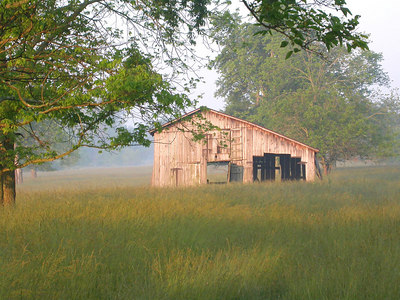 Barn in field of high summer grass in the Bluegrass region of Kentucky near Lexington