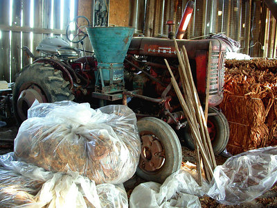 FARMALL tractor parked in Kentucky barn with dried burley tobacco  bales