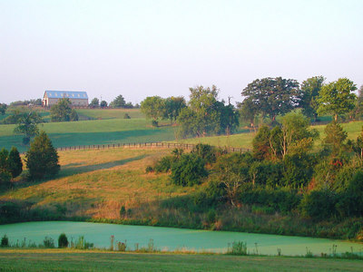 Beautiful shades of green displayed  in the rolling farmland of the Kentucky Bluegrass.