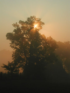 Sunlight streaming through a tree at sunrise in the Kentucky Bluegrass.